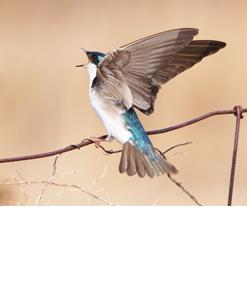 Birding in the Grand
