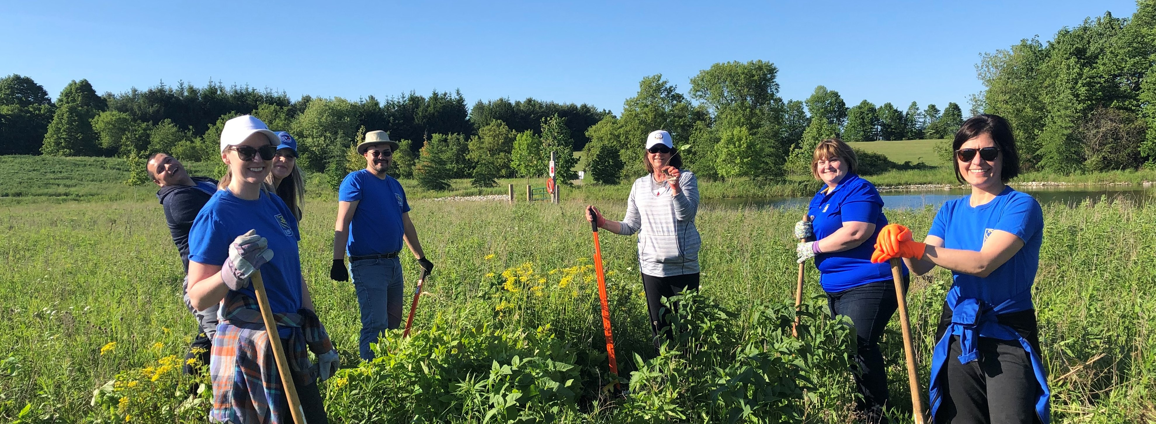 Volunteers remove invasive species at Guelph Lake Park