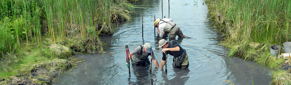 Men working to restore wetland
