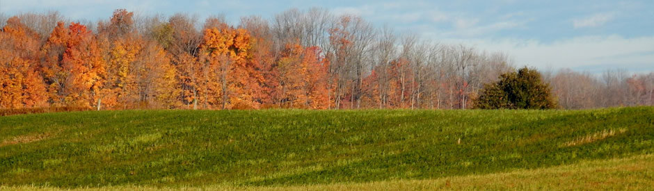 Forest in autumn behind a field of cover crops